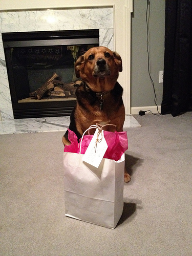 Molly waits for her present