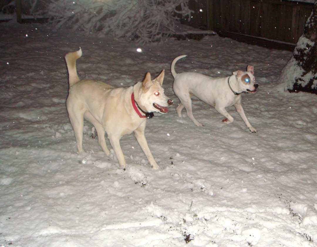 Freya and Chloe in the snow