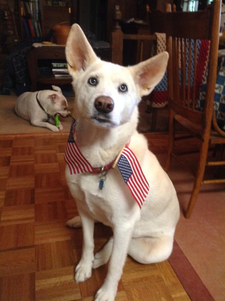 Freya on the 4th of July