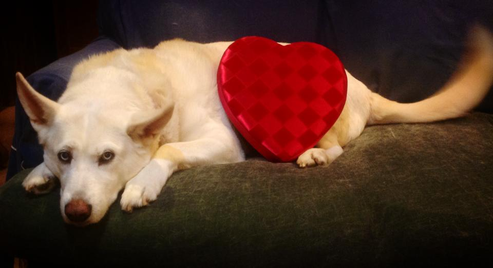 Freya on Valentine's Day