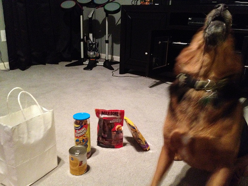 Molly howls in excitement over her birthday goodies