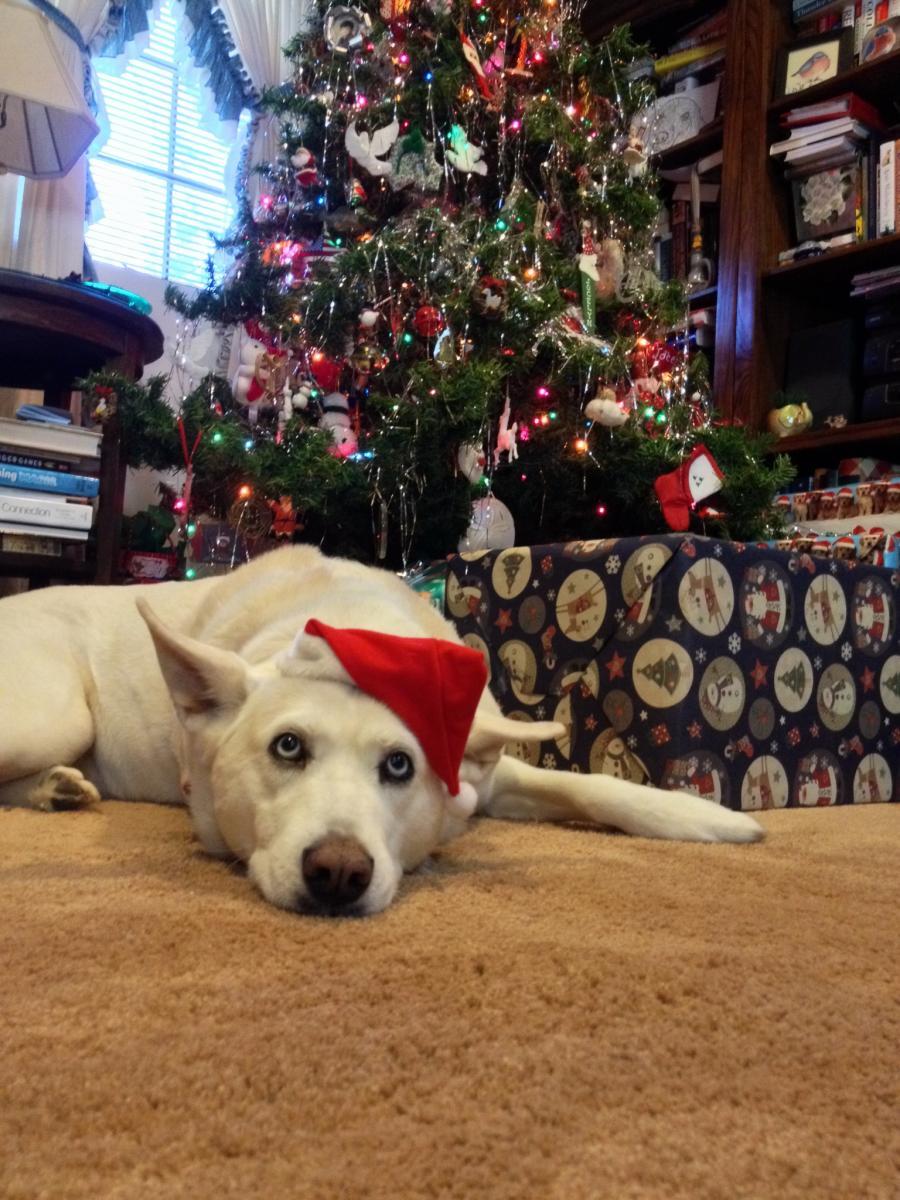 Santa Freya