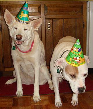 Freya and Chloe feel deep shame about wearing birthday hats