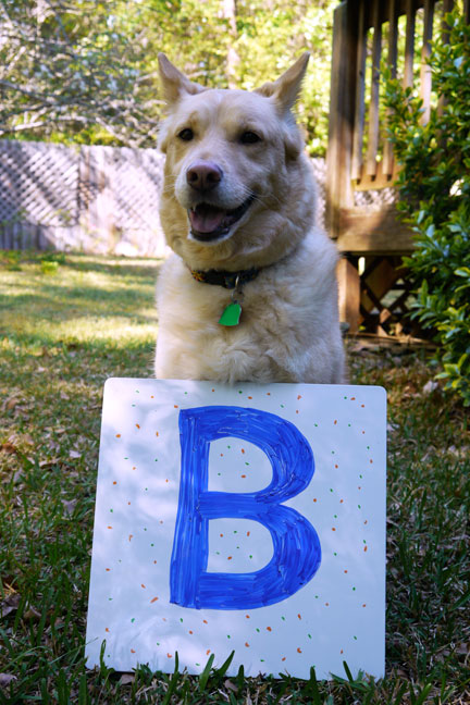 Bailey with the letter B