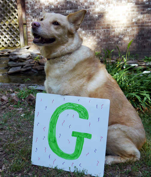 Bailey with the letter G