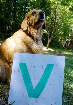 Lily with the letter V