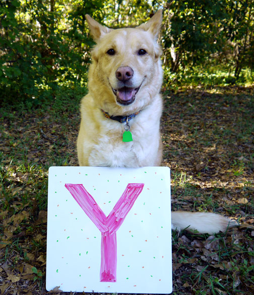 Bailey with the letter Y