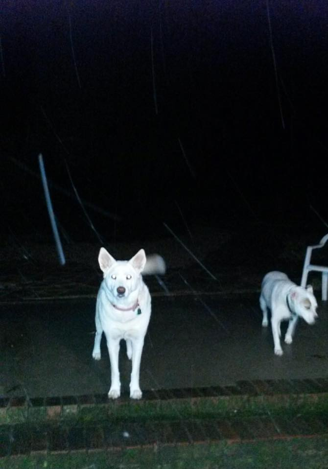 Dogs int the snow