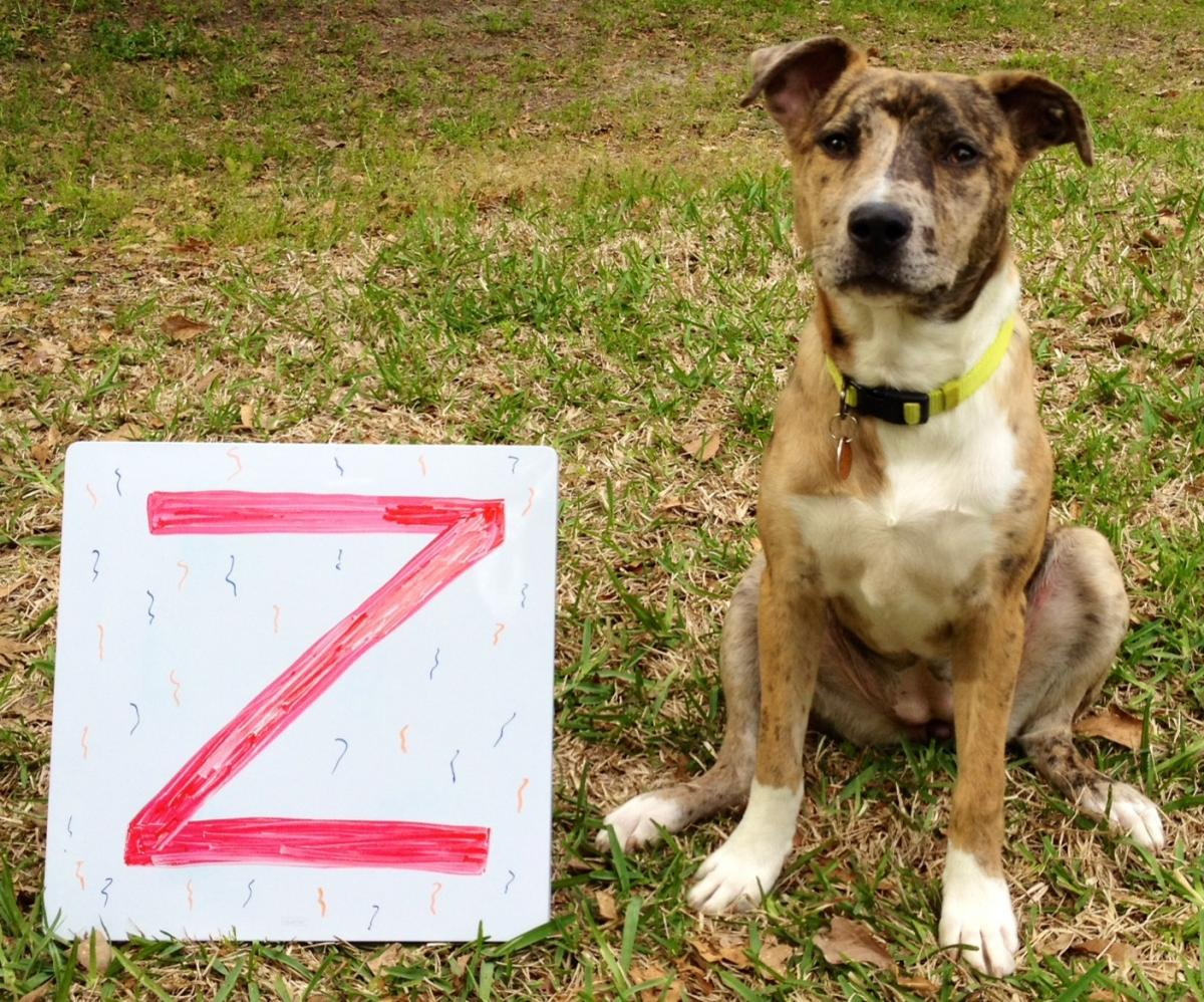 Kali with the letter Z